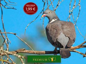 premium-ok-1024x683ok