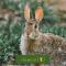 Conejos en Verano